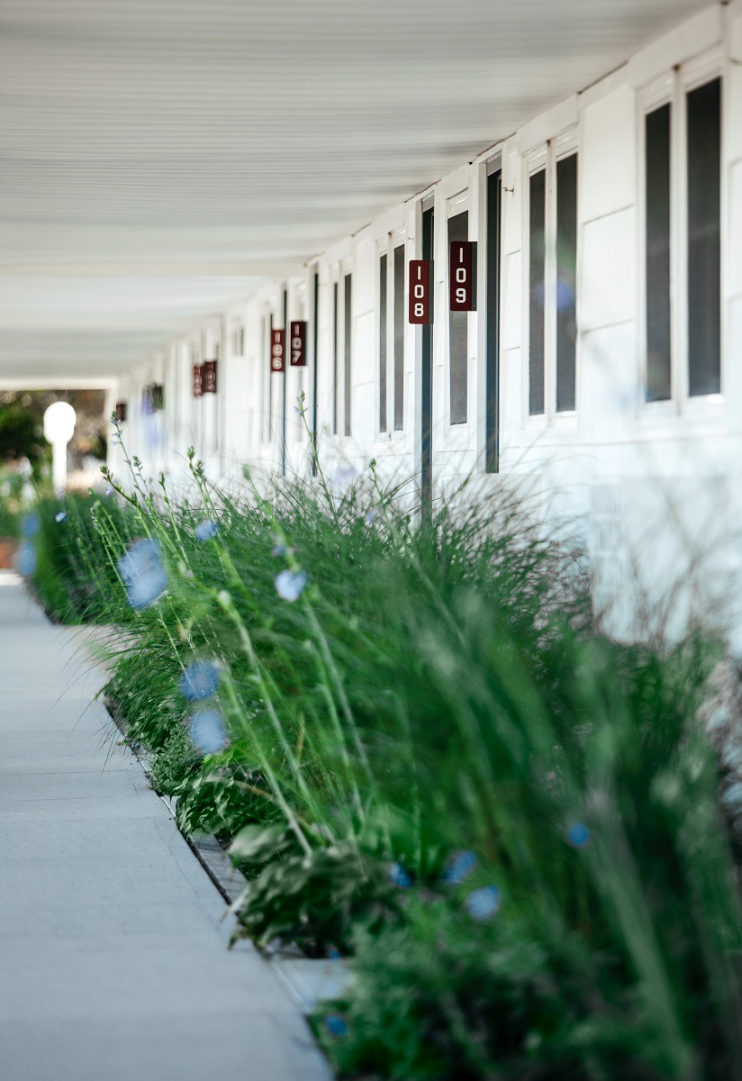 Grasses outside guest rooms