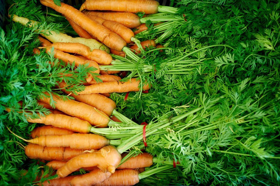 Carrots from farm
