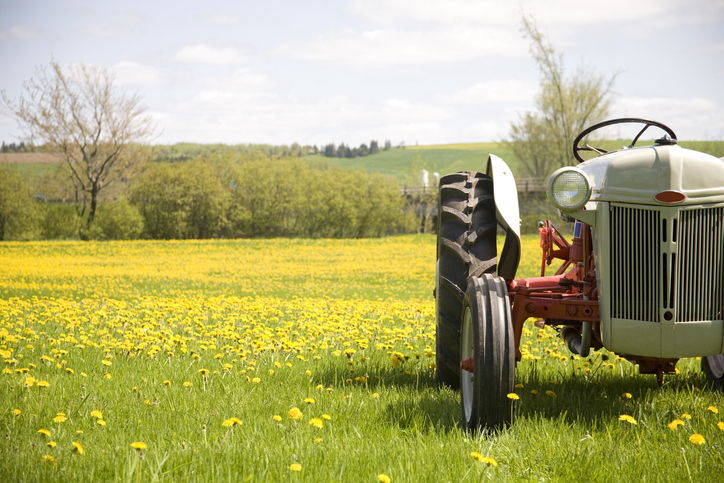 Tractor On A Field of Yellow Flowers